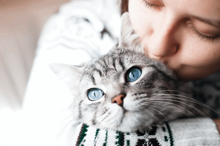 כל מה שצריך לדעת על גידול חתולים. צילום: shutterstock
