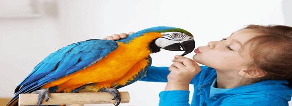 לא רק צבעים ונוצות: הכל על גידול תוכי בבית - תמונת המחשה