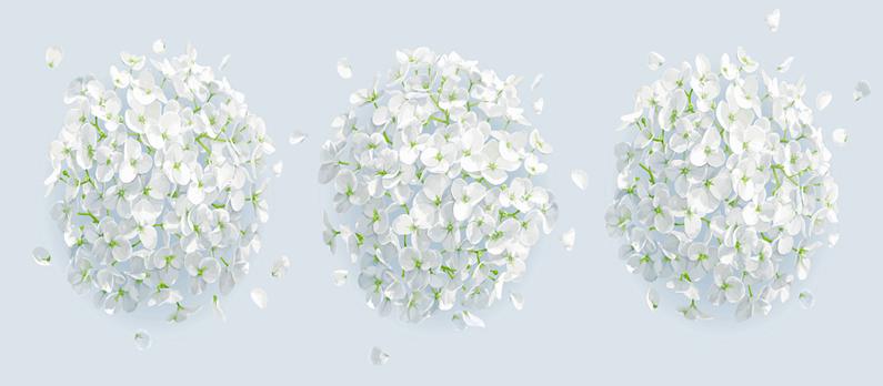 כתבות בנושא פרחים - תמונת אווירה