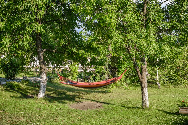 גיזום עצים בגינה פרטית. צילום: shutterstock
