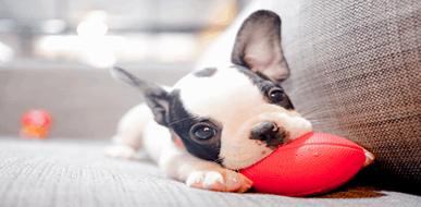 חבר (קטן) על ארבע: המדריך לגידול גורי כלבים - תמונת המחשה