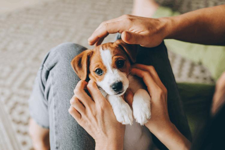 המדריך לגידול גור כלבים. צילום: shutterstock
