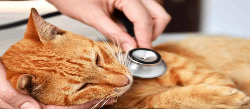 כתבות בנושא רופאים וטרינרים - תמונת אווירה