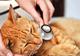 אימצתם כלב או חתול? הכירו את שירות הווטרינר העירוני - תמונת המחשה