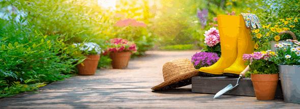 על צמחי בית ועל סוגי שתילים לגינה - מידע חשוב בכל עונה - תמונת המחשה