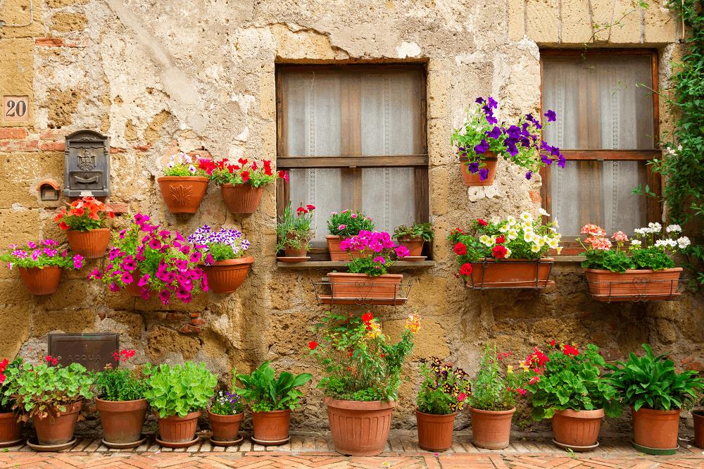 צמחי בית: תמונה שאטרסטוק