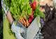 מגדלים את הסלט בבית: מדריך לגידול ירקות ביתי - תמונת המחשה