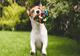 חנות לבעלי חיים – אופנה ושמה כלבים - תמונת המחשה