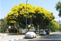 טיפול בעצים בוגרים