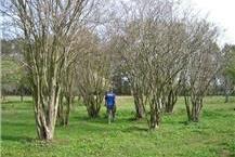 שיווק עצי בר