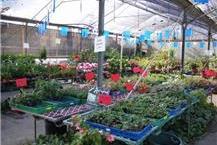 מגוון שתילים וצמחים