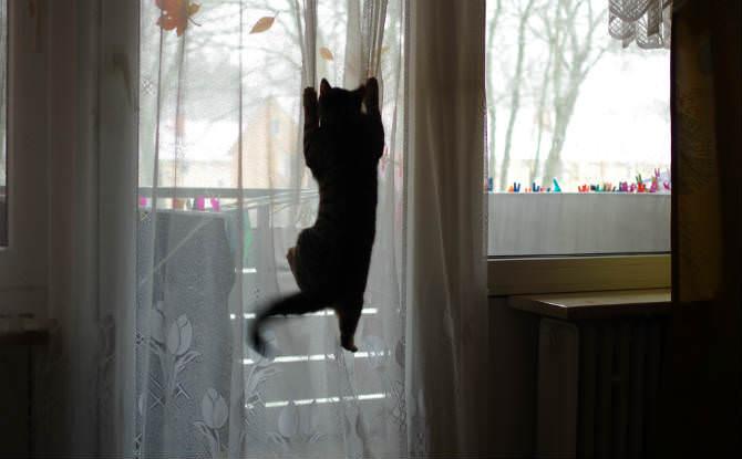 חתול נתלה על וילון