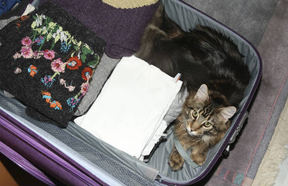 חתול יושב במזוודה
