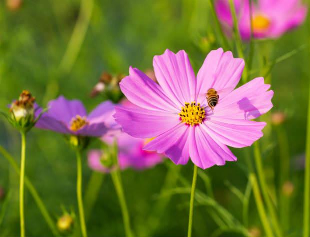 דבורה ופרח