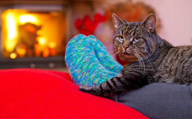 חתול מתחמם מול האח על רגלים עם גרביים