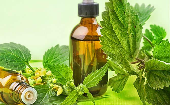שיקוי רפואי וצמחים