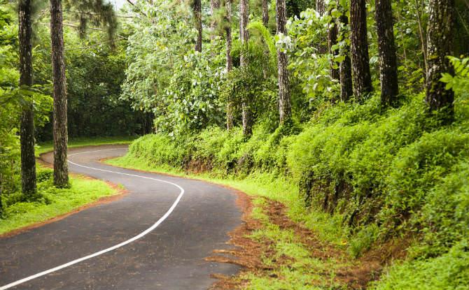 יער שמתאים לטיול אופניים
