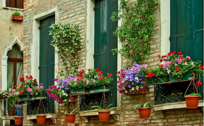 פרחים על אדן החלון